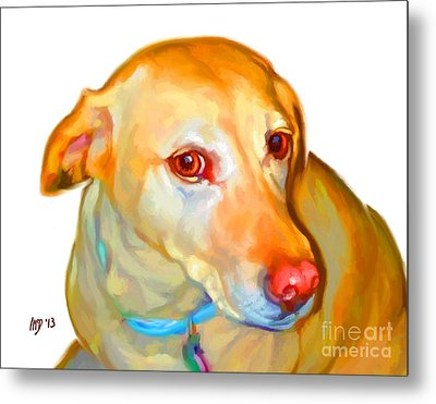 Labrador Retriever Art Metal Print
