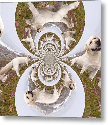 Labrador Retriever Goes Walkies  Metal Print by Nikki Keep