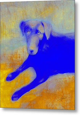 Labrador Retriever In Blue And Yellow Metal Print by Ann Powell