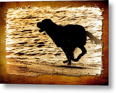 Metal Print featuring the photograph Labrador Silhouette by Eleanor Abramson