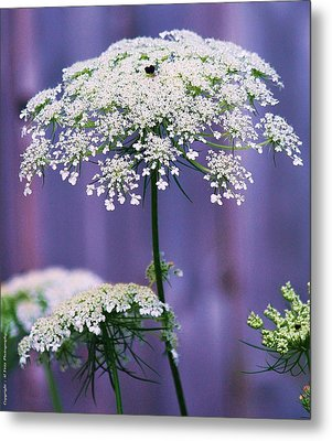Lace Of August Metal Print by Al Fritz