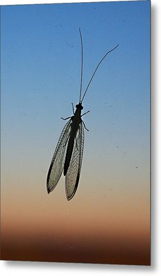Lacewing Metal Print by Carl Engman