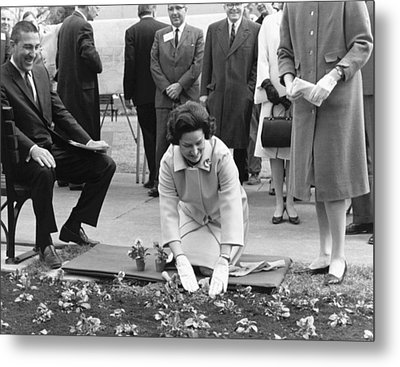Lady Bird Johnson Planting Metal Print by Underwood Archives