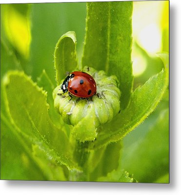 Lady Bug In The Garden Metal Print
