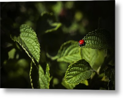 Metal Print featuring the photograph Ladybug by Bradley R Youngberg