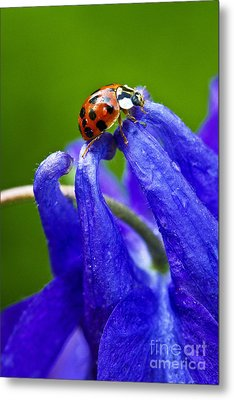 Metal Print featuring the photograph Ladybug by Carrie Cranwill