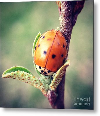 Ladybug  Metal Print by Kerri Farley