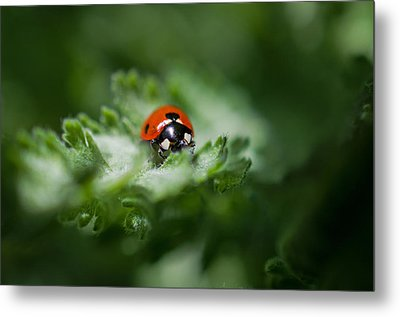 Ladybug On The Move Metal Print by Jordan Blackstone