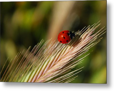 Metal Print featuring the photograph Ladybug by Richard Stephen