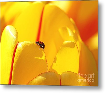 Ladybug - The Journey Metal Print