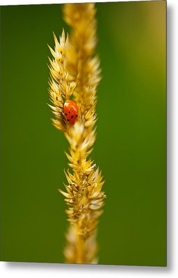 Ladybug Tucked In Metal Print by Sarah Crites