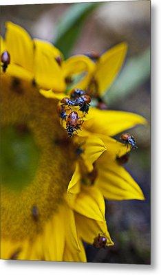Ladybugs Close Up Metal Print by Garry Gay