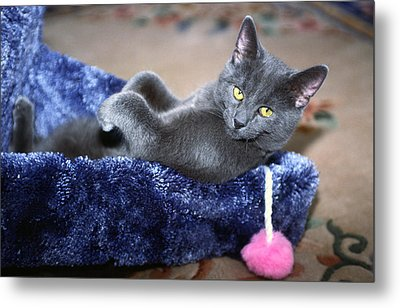 Metal Print featuring the photograph Laid Back by Sally Weigand