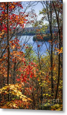 Lake And Fall Forest Metal Print by Elena Elisseeva