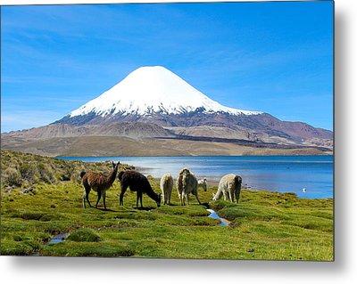 Lake Chungara Chilean Andes Metal Print by Kurt Van Wagner