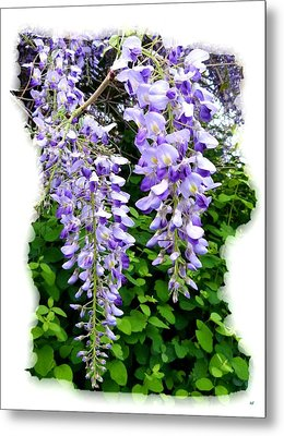 Lake Country Wisteria Metal Print by Will Borden