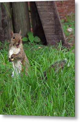 Metal Print featuring the photograph Lake Howard Squirrel 000 by Chris Mercer