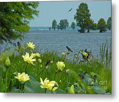Metal Print featuring the photograph Lake Lotus And Swallows by Deborah Smith