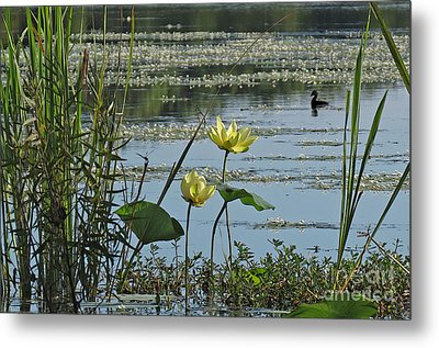 Metal Print featuring the photograph Lake Marion Morning by Deborah Smith