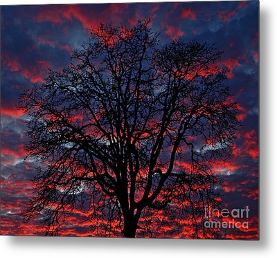 Lake Oswego Sunset Metal Print by Nick  Boren