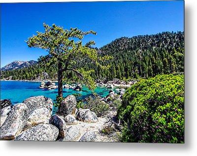 Lake Tahoe Bonsai Tree Metal Print by Scott McGuire