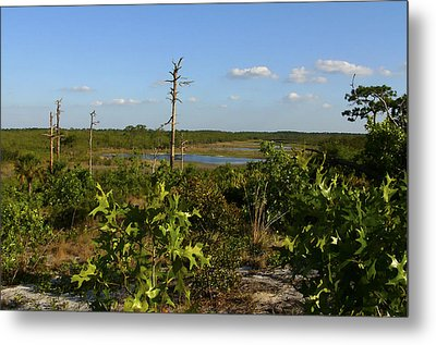 Lake View II. Lake Wales Ridge. Metal Print by Chris  Kusik
