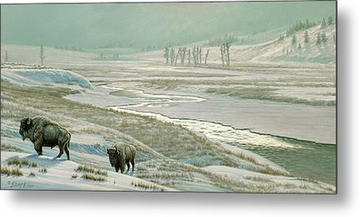 Lamar Valley - Bison Metal Print by Paul Krapf