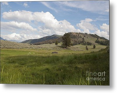 Metal Print featuring the photograph Lamar Valley No. 2 by Belinda Greb