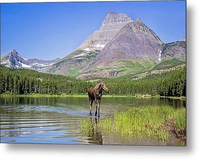 Land Of The Moose Metal Print by Jack Bell