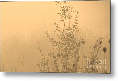 Land Of Wildness Metal Print