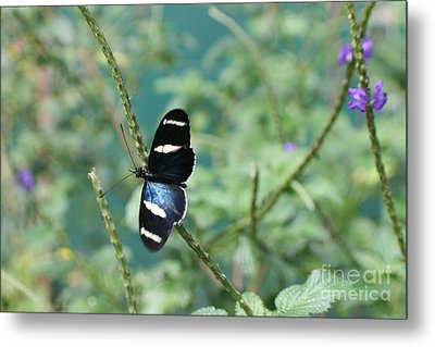 Landing Metal Print by Barbara Bardzik