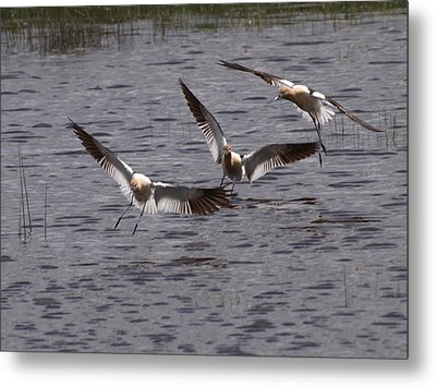Metal Print featuring the photograph Landing by Jenessa Rahn