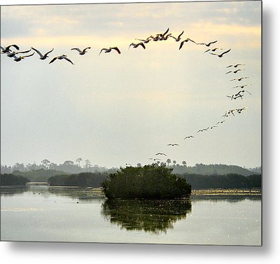 Landing Pattern Metal Print by William Beuther
