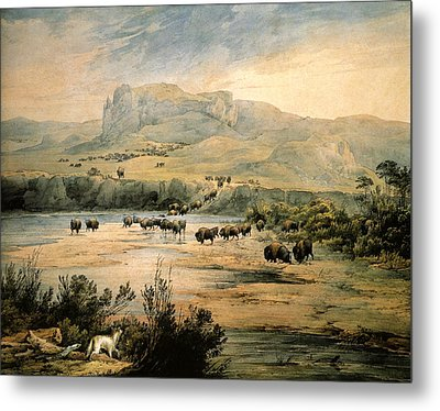 Landscape With Buffalo Ont The Upper Missouri Metal Print by Karl Bodmer