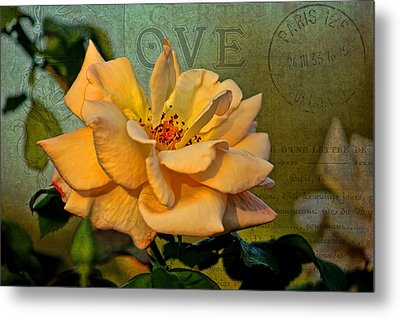 Language Of The Heart - Rose Metal Print by HH Photography of Florida