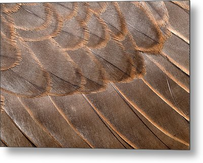 Lanner Falcon Wing Feathers Abstract Metal Print