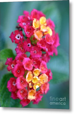 Metal Print featuring the photograph Lantana by Henrik Lehnerer