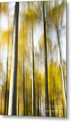 Larch In Abstract Metal Print by Anne Gilbert