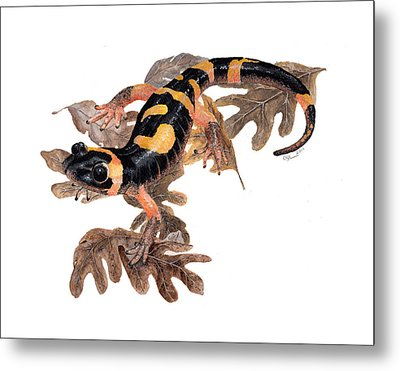 Large Blotched Salamander On Oak Leaves Metal Print by Cindy Hitchcock