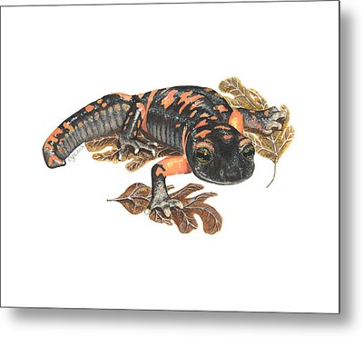 Large Blotched Salamander2 Metal Print by Cindy Hitchcock