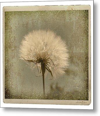 Large Dandelion Metal Print by Linda Olsen