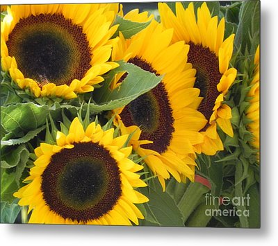 Metal Print featuring the photograph Large Sunflowers by Chrisann Ellis