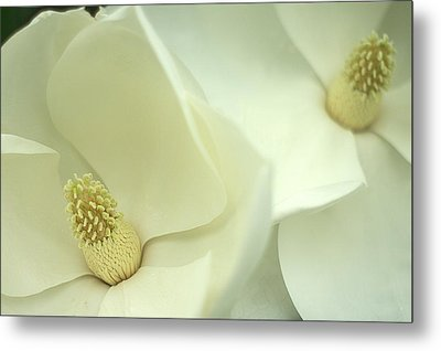 Metal Print featuring the photograph Large White Magnolias by Suzanne Powers