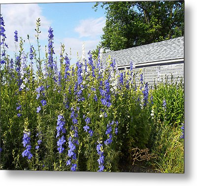 Larkspur Metal Print by Doug Kreuger