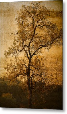 Last Fall Metal Print by Lena Wilhite