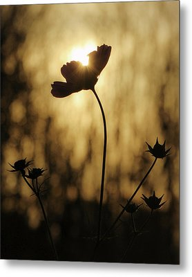 Metal Print featuring the photograph Last Light by David Hufstader
