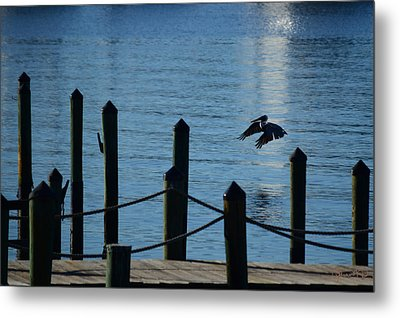 Last Light Flight Metal Print
