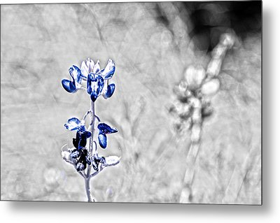 Last Of The Bluebonnets With Color Isolation Metal Print by Lorri Crossno