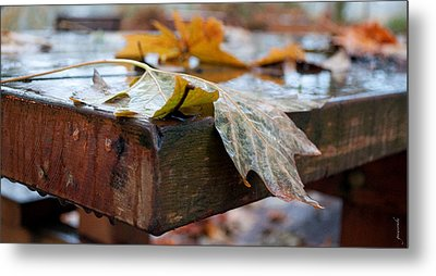 Last Of The Leaves Metal Print by Gwyn Newcombe