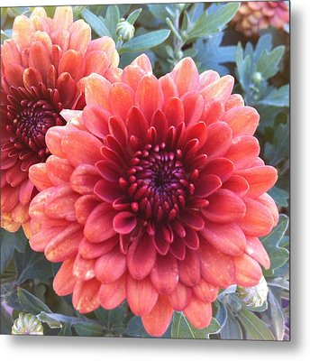 Metal Print featuring the photograph Last Of The Summer by Denyse Duhaime